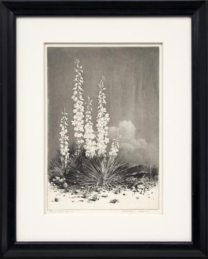 """George Elbert Burr, """"Soapweed, Arizona (no. 2); edition of 40 (from the Desert Set)"""", etching, circa 1924 painting fine art for sale purchase buy sell auction consign denver colorado art gallery museum"""